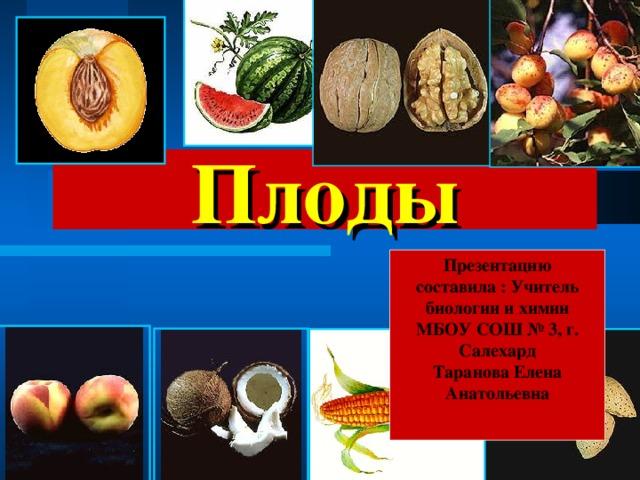 Плоды Презентацию составила : Учитель биологии и химии МБОУ СОШ № 3, г. Салехард Таранова Елена Анатольевна
