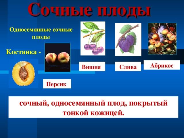 Сочные плоды Односемянные сочные плоды Костянка - Абрикос Вишня Слива Персик сочный, односемянный плод, покрытый тонкой кожицей.