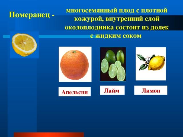 многосемянный плод с плотной кожурой, внутренний слой околоплодника состоит из долек с жидким соком  Померанец - Лимон Лайм Апельсин