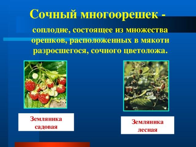 Сочный многоорешек - соплодие, состоящее из множества орешков, расположенных в мякоти разросшегося, сочного цветоложа. Земляника садовая Земляника лесная