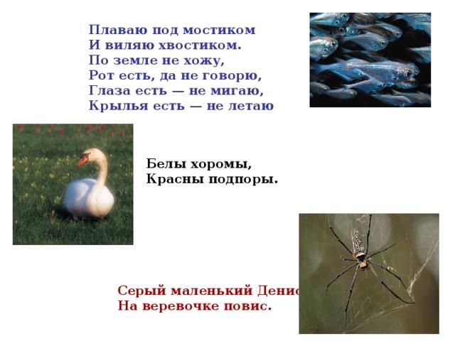 Плаваю под мостиком  И виляю хвостиком.  По земле не хожу,  Рот есть, да не говорю,  Глаза есть — не мигаю,  Крылья есть — не летаю  Белы хоромы,  Красны подпоры. Серый маленький Денис  На веревочке повис.
