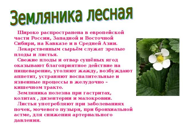 Широко распространена в европейской части России, Западной и Восточной Сибири, на Кавказе и в Средней Азии.  Лекарственным сырьём служат зрелые плоды и листья.  Свежие плоды и отвар сушёных ягод оказывают благоприятное действие на пищеварение, утоляют жажду, возбуждают аппетит, устраняют воспалительные и язвенные процессы в желудочно – кишечном тракте.  Земляника полезна при гастритах, колитах , дизентерии и малокровии.  Листья употребляют при заболеваниях почек, мочевого пузыря, при бронхиальной астме, для снижения артериального давления.