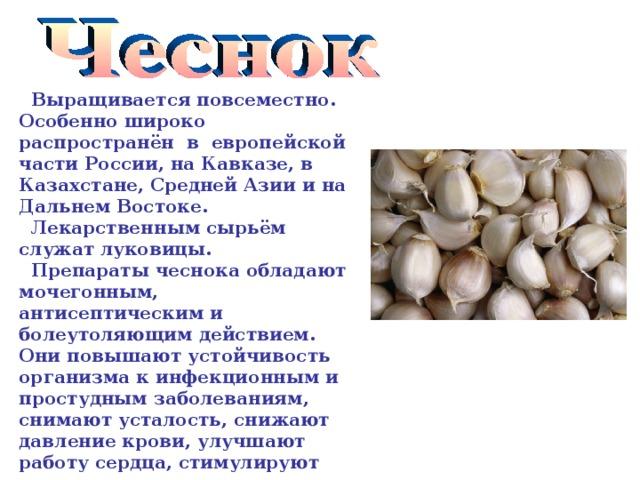 Выращивается повсеместно. Особенно широко распространён в европейской части России, на Кавказе, в Казахстане, Средней Азии и на Дальнем Востоке.  Лекарственным сырьём служат луковицы.  Препараты чеснока обладают мочегонным, антисептическим и болеутоляющим действием. Они повышают устойчивость организма к инфекционным и простудным заболеваниям, снимают усталость, снижают давление крови, улучшают работу сердца, стимулируют пищеварение.