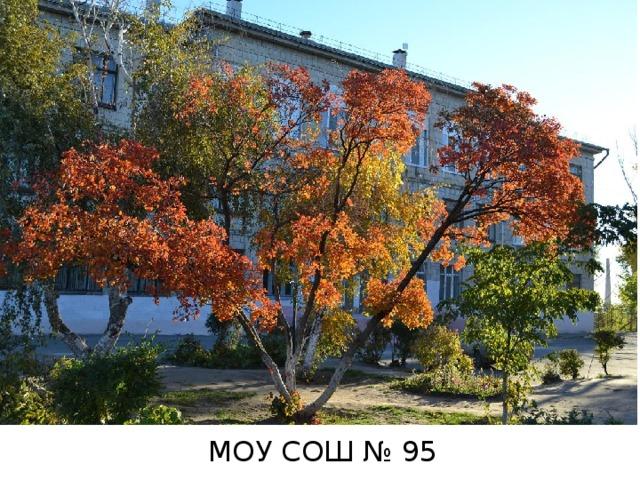 МОУ СОШ № 95