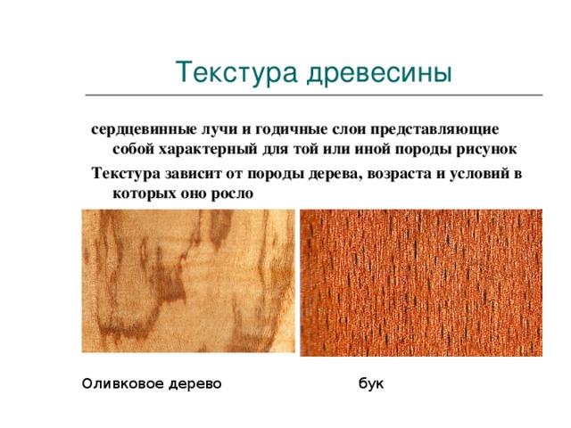 Текстура древесины сердцевинные лучи и годичные слои представляющие собой характерный для той или иной породы рисунок Текстура зависит от породы дерева, возраста и условий в которых оно росло  Оливковое дерево бук