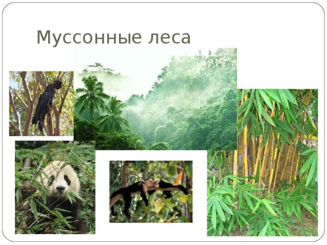 Муссонные леса