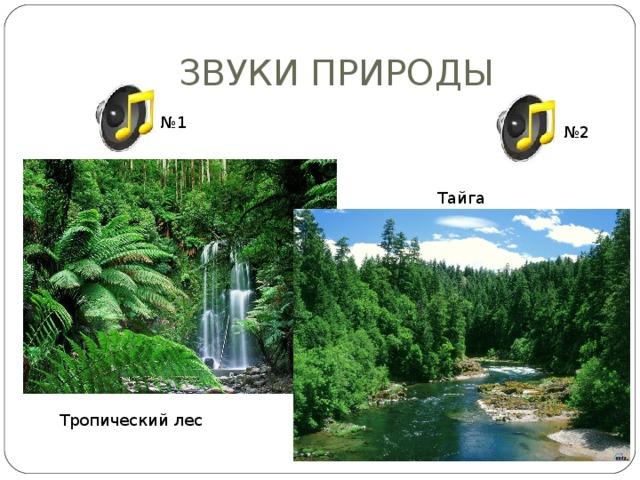 ЗВУКИ ПРИРОДЫ № 1 № 2 Тайга Тропический лес