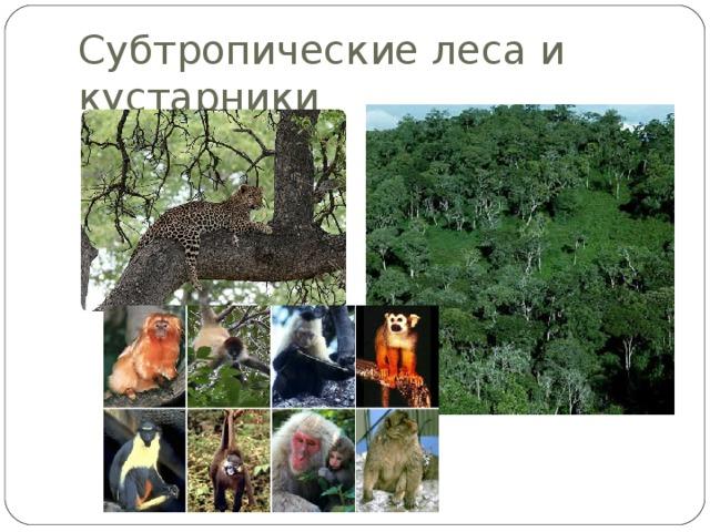 Субтропические леса и кустарники