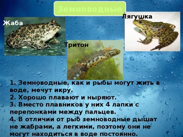 Земноводные Лягушка Жаба Тритон 1. Земноводные, как и рыбы могут жить в воде, мечут икру. 2. Хорошо плавают и ныряют. 3. Вместо плавников у них 4 лапки с перепонками между пальцев. 4. В отличии от рыб земноводные дышат не жабрами, а легкими, поэтому они не могут находиться в воде постоянно.