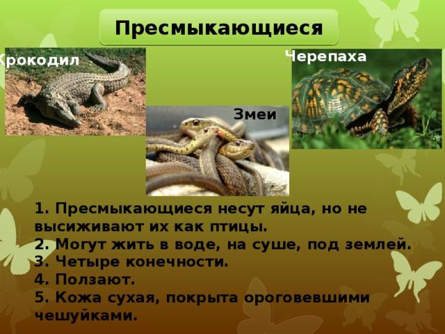 Пресмыкающиеся Черепаха Крокодил Змеи 1. Пресмыкающиеся несут яйца, но не высиживают их как птицы. 2. Могут жить в воде, на суше, под землей. 3. Четыре конечности. 4. Ползают. 5. Кожа сухая, покрыта ороговевшими чешуйками.