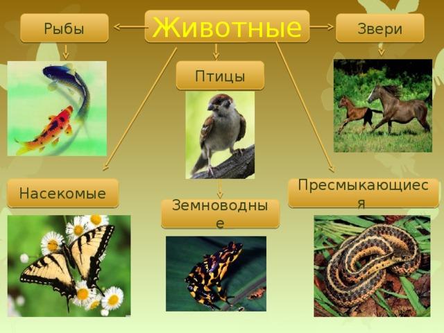 Животные Звери Рыбы Птицы Насекомые Пресмыкающиеся Земноводные