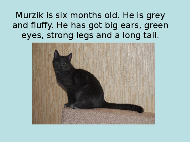 Murzik is six months old. He is grey and fluffy. He has got big ears, green eyes, strong legs and a long tail.