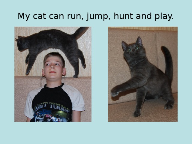 My cat can run, jump, hunt and play.
