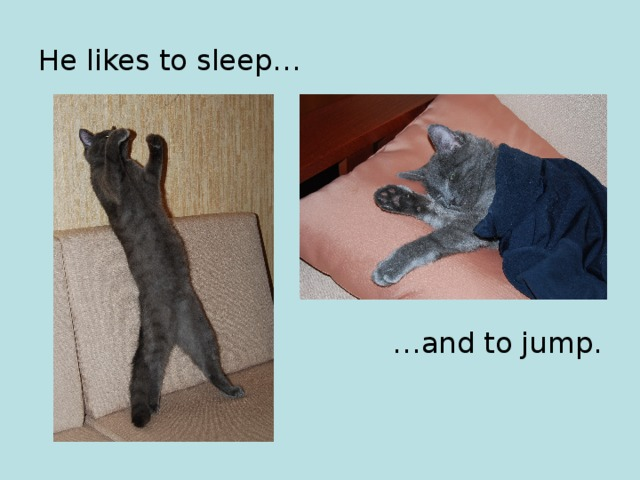 He likes to sleep… … and to jump.