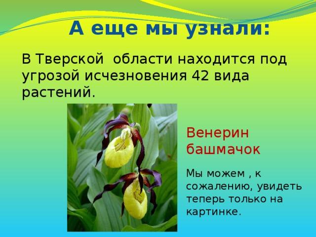 В Тверской области находится под угрозой исчезновения 42 вида растений. Венерин башмачок Мы можем , к сожалению, увидеть теперь только на картинке. А еще мы узнали: