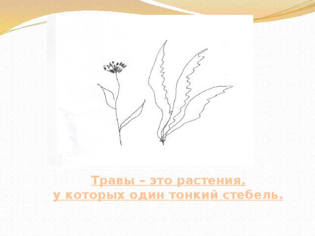 Травы – это растения, у которых один тонкий стебель.