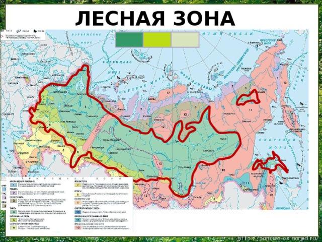Лесная зона  Лесная зона находится южнее зоны тундры. На карте она обозначена зелёным цветом.