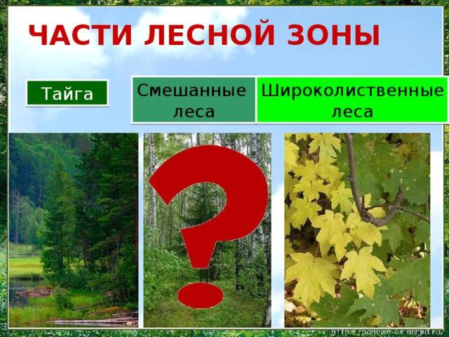 ЧАСТИ ЛЕСНОЙ ЗОНЫ Широколиственные Смешанные леса леса Тайга