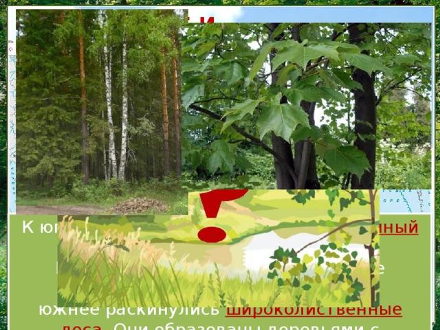 СМЕШАННЫЕ И ШИРОКОЛИСТВЕННЫЕ ЛЕСА К югу на смену тайге приходит смешанный лес . В нём растут хвойные и лиственные деревья. Ещё южнее раскинулись широколиственные леса . Они образованы деревьями с широкими, крупными листьями. ʹ