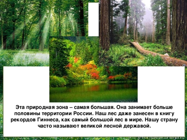 Эта природная зона – самая большая. Она занимает больше половины территории России. Наш лес даже занесен в книгу рекордов Гиннеса, как самый большой лес в мире. Нашу страну часто называют великой лесной державой.