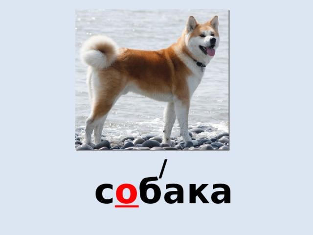 / с о бака