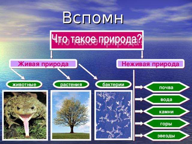 Вспомни! Живая природа Неживая природа животные растения бактерии почва вода камни горы звезды 2
