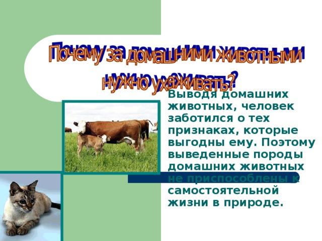 Выводя домашних животных, человек заботился о тех признаках, которые выгодны ему. Поэтому выведенные породы домашних животных не приспособлены к самостоятельной жизни в природе. 2