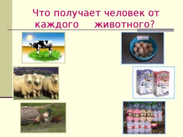 Что получает человек от каждого  животного?  2