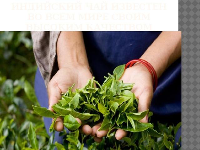 Индийский чай известен во всем мире своим высоким качеством