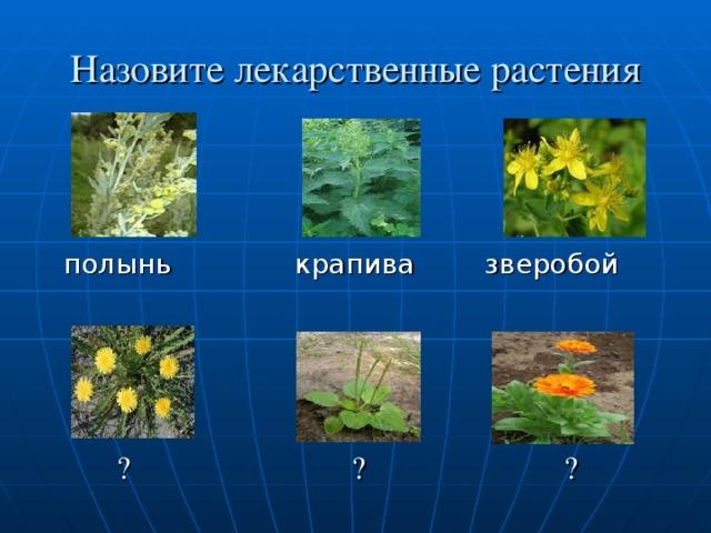 Назовите лекарственные растения  полынь крапива зверобой  ? ? ?