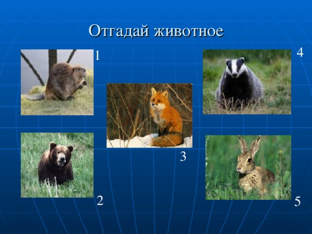 Отгадай животное 4 1 3 2 5