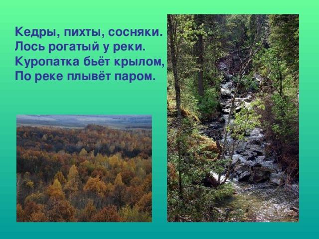 Кедры, пихты, сосняки. Лось рогатый у реки. Куропатка бьёт крылом, По реке плывёт паром.