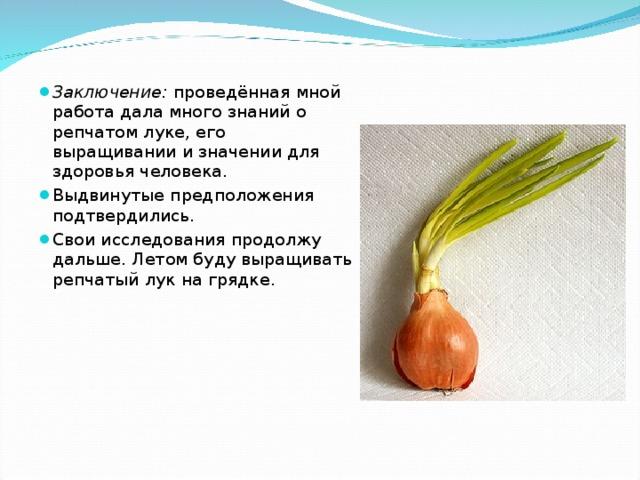 Заключение: проведённая мной работа дала много знаний о репчатом луке, его выращивании и значении для здоровья человека. Выдвинутые предположения подтвердились. Свои исследования продолжу дальше. Летом буду выращивать репчатый лук на грядке.