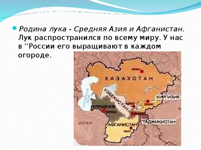 Родина лука - Средняя Азия и Афганистан. Лук распространился по всему миру. У нас в ''России его выращивают в каждом огороде.