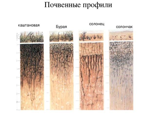 Почвенные профили   солонец каштановая Бурая солончак