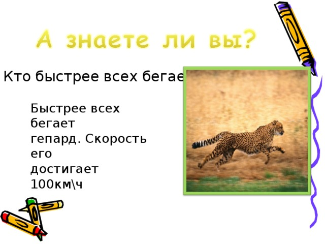 Кто быстрее всех бегает? Быстрее всех бегает гепард. Скорость его достигает 100км\ч