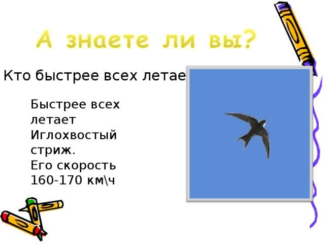 Кто быстрее всех летает? Быстрее всех летает Иглохвостый стриж. Его скорость 160-170 км\ч