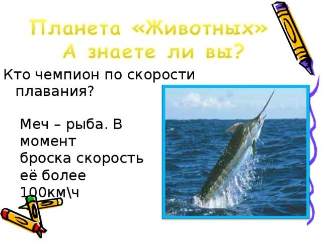 Кто чемпион по скорости плавания? Меч – рыба. В момент броска скорость её более 100км\ч