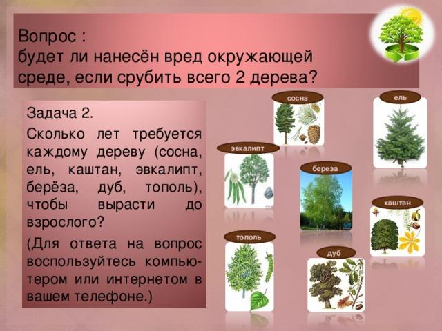 Вопрос :  будет ли нанесён вред окружающей  среде, если срубить всего 2 дерева? ель сосна Задача 2. Сколько лет требуется каждому дереву (сосна, ель, каштан, эвкалипт, берёза, дуб, тополь), чтобы вырасти до взрослого? (Для ответа на вопрос воспользуйтесь компью- тером или интернетом в вашем телефоне.) эвкалипт береза каштан тополь дуб