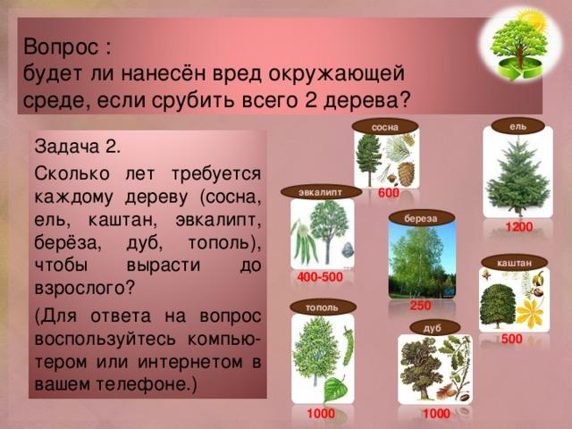 Вопрос :  будет ли нанесён вред окружающей  среде, если срубить всего 2 дерева? ель сосна Задача 2. Сколько лет требуется каждому дереву (сосна, ель, каштан, эвкалипт, берёза, дуб, тополь), чтобы вырасти до взрослого? (Для ответа на вопрос воспользуйтесь компью- тером или интернетом в вашем телефоне.) 600 эвкалипт береза 1200 каштан 400-500 250 тополь дуб 500 1000 1000