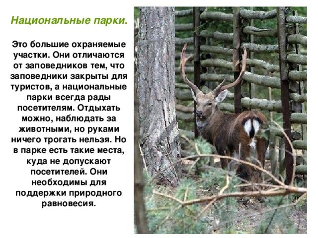Национальные парки .  Это большие охраняемые участки. Они отличаются от заповедников тем, что заповедники закрыты для туристов, а национальные парки всегда рады посетителям. Отдыхать можно, наблюдать за животными, но руками ничего трогать нельзя. Но в парке есть такие места, куда не допускают посетителей. Они необходимы для поддержки природного равновесия.