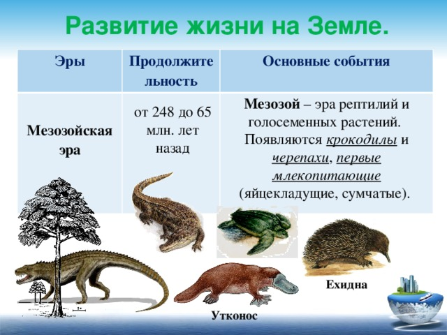 Развитие жизни на Земле. Эры  Продолжительность Основные события Мезозойская эра  Мезозой – эра рептилий и голосеменных растений. Появляются крокодилы и черепахи , первые млекопитающие (яйцекладущие, сумчатые). от 248 до 65 млн. лет назад Ехидна Утконос
