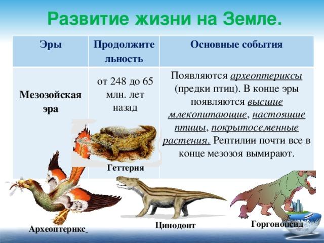 Развитие жизни на Земле. Эры  Продолжительность Основные события Мезозойская эра     Появляются археоптериксы (предки птиц). В конце эры появляются высшие млекопитающие , настоящие птицы , покрытосеменные растения. Рептилии почти все в конце мезозоя вымирают. от 248 до 65 млн. лет назад Геттерия Горгонопсид Цинодонт Археоптерикс  13