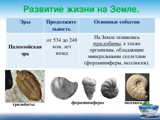 Развитие жизни на Земле. Эры Продолжительность  Основные события Палеозойская эра  На Земле появились трилобиты , а также организмы, обладающие минеральными скелетами (фораминиферы, моллюски). от 534 до 248 млн. лет назад фораминиферы моллюск трилобиты