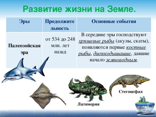 Развитие жизни на Земле. Эры  Продолжительность Основные события Палеозойская эра    В середине эры господствуют хрящевые рыбы (акулы, скаты), появляются первые  костные рыбы , двоякодышащие , давшие начало земноводным . от 534 до 248 млн. лет назад Стегоцефал Латимерия