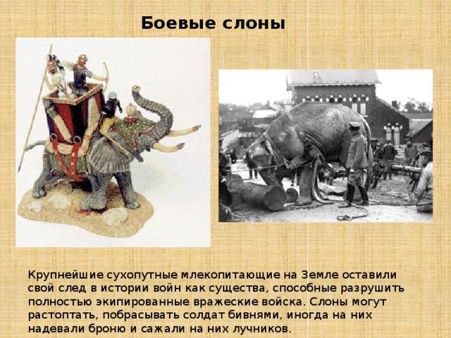 Боевые слоны Крупнейшие сухопутные млекопитающие на Земле оставили свой след в истории войн как существа, способные разрушить полностью экипированные вражеские войска. Слоны могут растоптать, побрасывать солдат бивнями, иногда на них надевали броню и сажали на них лучников.