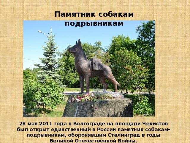 Памятник собакам подрывникам 28 мая 2011 года в Волгограде на площади Чекистов был открыт единственный в России памятник собакам-подрывникам, оборонявшим Сталинград в годы Великой Отечественной Войны.