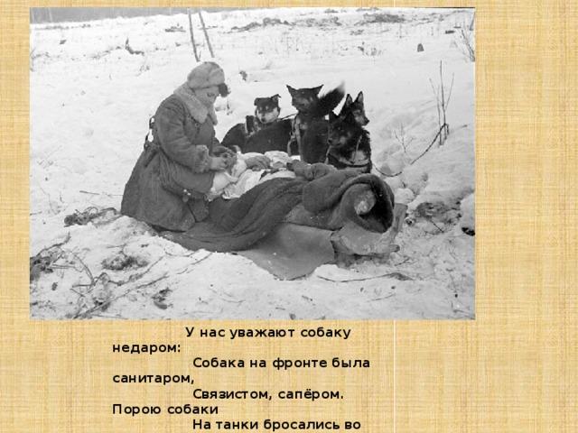 У нас уважают собаку недаром:          Собака на фронте была санитаром,          Связистом, сапёром. Порою собаки          На танки бросались во время атаки.          Да, на войне получалось и так,          Что «тигры», «пантеры» боялись собак .