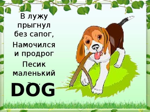 В лужу прыгнул без сапог, Намочился и продрог Песик маленький – … DOG