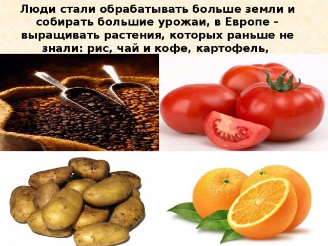 Люди стали обрабатывать больше земли и собирать большие урожаи, в Европе – выращивать растения, которых раньше не знали: рис, чай и кофе, картофель, апельсины, помидоры.